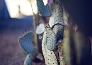 stock_cactus_brick_wall